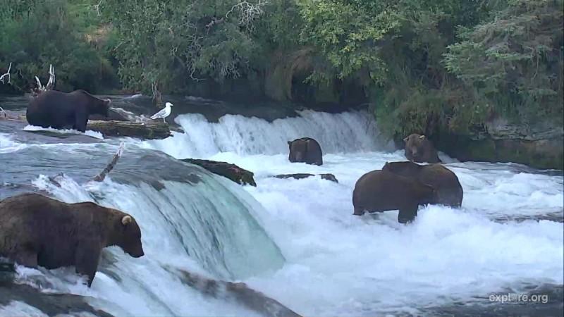 bears at Brooks Falls_08172018 (Suzzi)