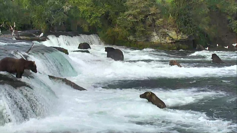 7 bears at the falls on August 16 Snapshot by Corrwest