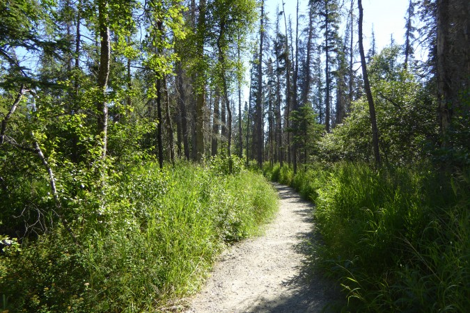 forest along Brooks Falls trail_2_06302016