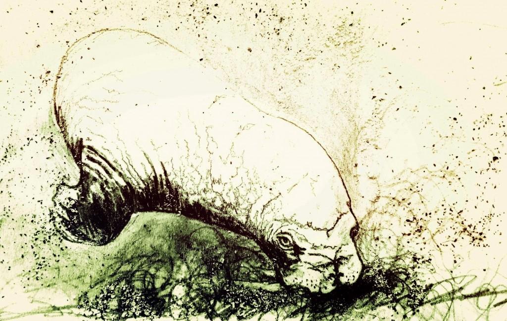 walrus pic
