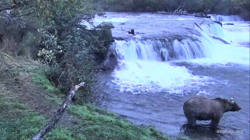 128 Grazer at the falls Snapshot by LaniH