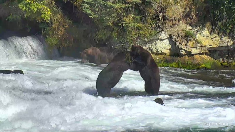 151 Walker and 503 play fight Snapshot by GreenRiver