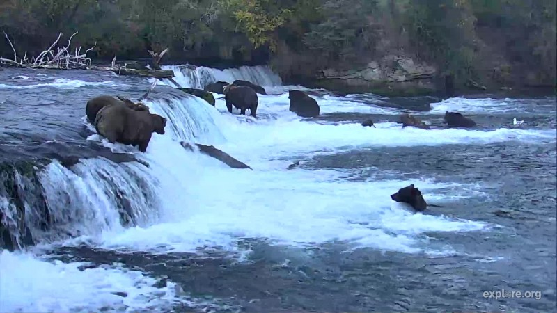 So many bears at the falls it looks more like July then September Snapshot by Shel_