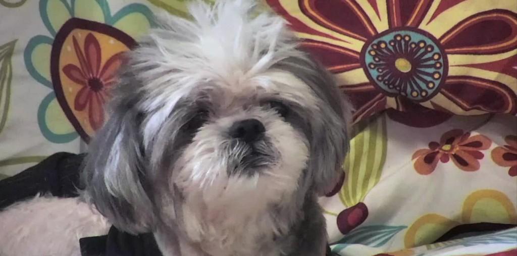 senior dogs blog