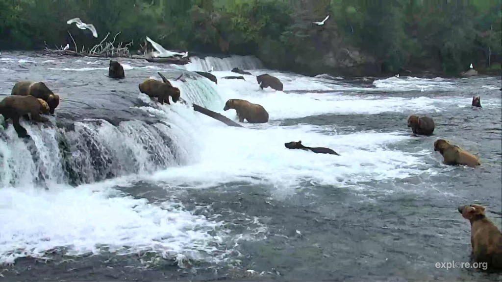 Crowded falls Snapshot by LaniH