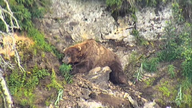 755 Scare D Bear Snapshot by LaniH