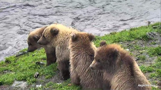 Bear Cam Week  in Review October  12