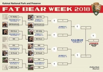 Fat Bear Week 2018 Quarterfinals