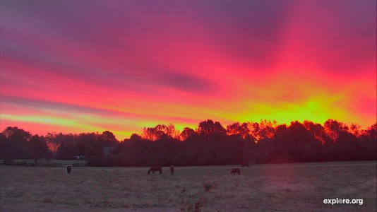 Horses_Sunrise_CamOp Melissa_10.25.18