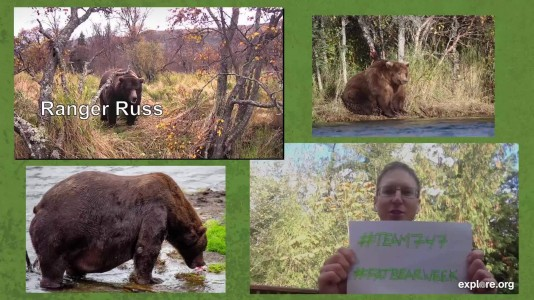 Fat Bear live chat with Mike Fitz and Ranger Russ Snapshot by LaniH