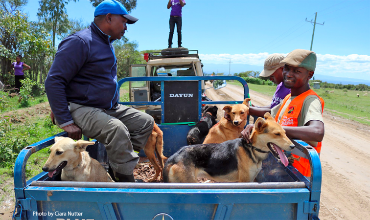 Community members bring their dogs during the Laikipia Rabies Vaccination Campaign