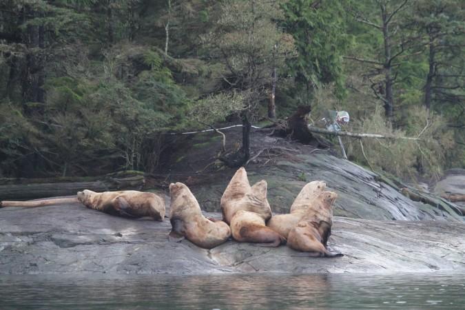 Sea Lions 11.28.18_IMG_7451