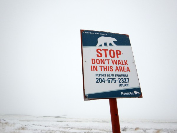 11 polar bear warning sign_11152018_1