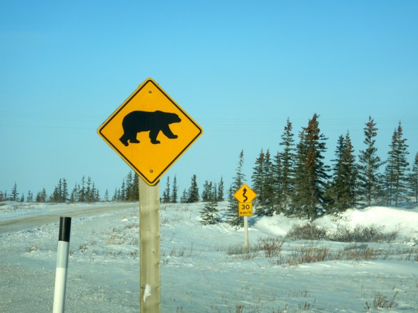 12 polar bear warning road sign_11182018