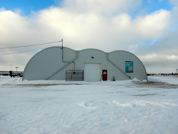 Polar Bear Alert's holding facility, aka the Polar Bear Jail