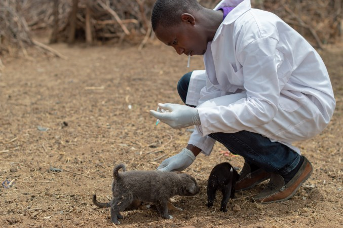 A volunteer vet during the 4th annual Laikipia Rabies Vaccination Campaign