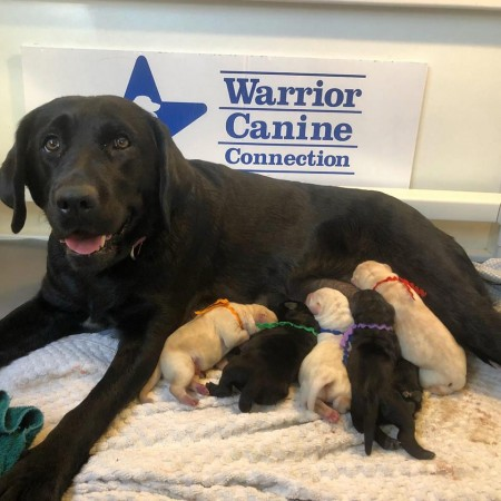 laura wcc new litter