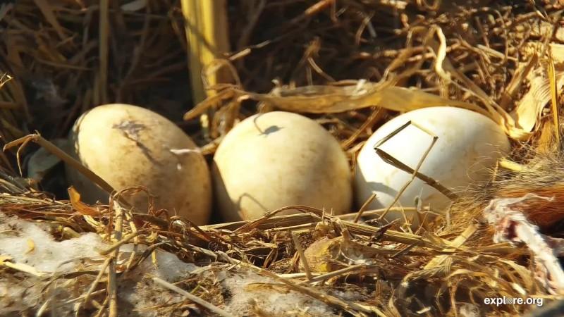 Eagles_DE Third Egg_CamOp Spish_3.8.19