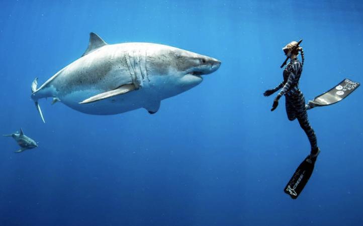 ocean ramsey great white shark