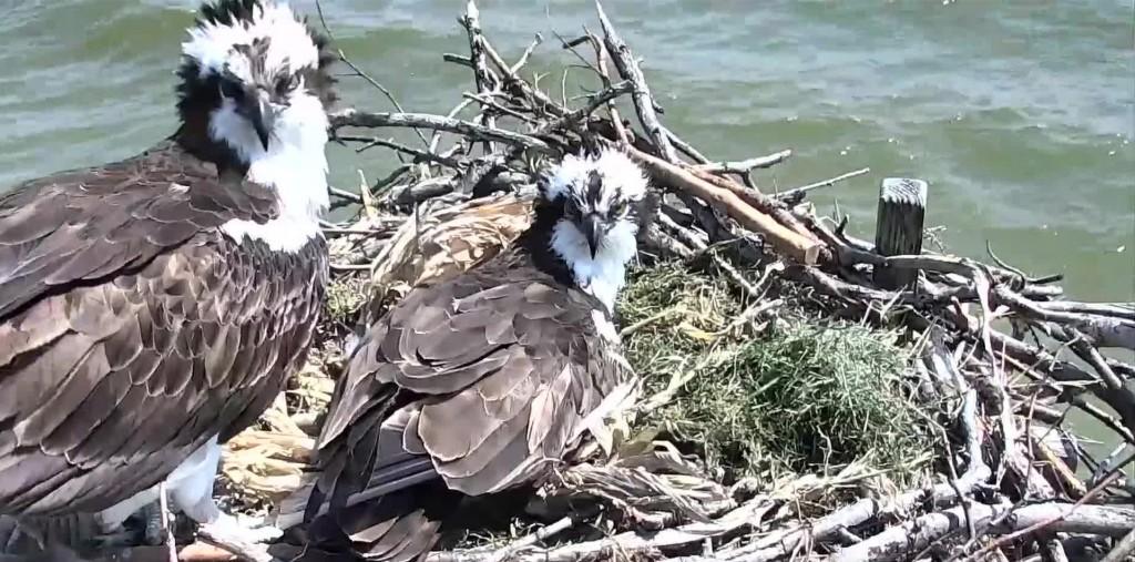osprey cc blog
