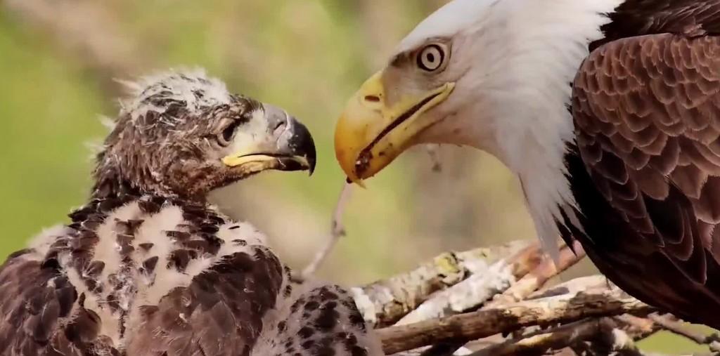 dnn eagles blog dn9