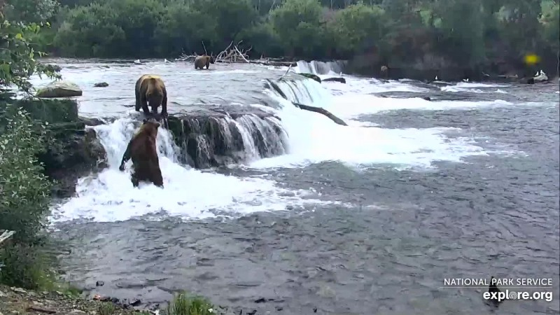 856 (below the falls) letting 68 know he's still the boss Snapshot by DTB