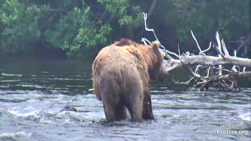Bears_Butt_Shel__WINNER