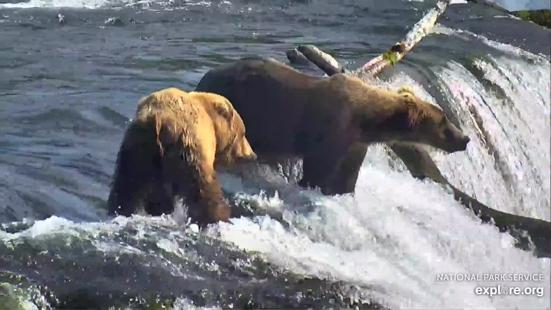 Bears_Butt_Susie78_WINNER