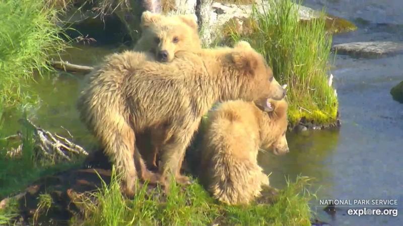 Bears_Family_BonnieLee_WINNER