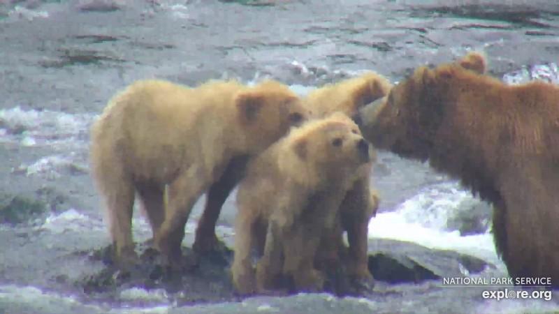 Bears_Family_SgtPepper_WINNER
