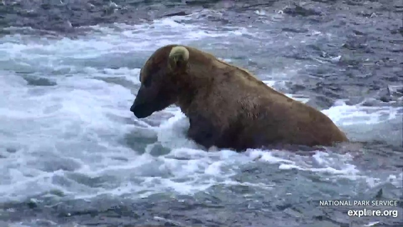 Bears_Otis_Bearz61_7.16.19_WINNER