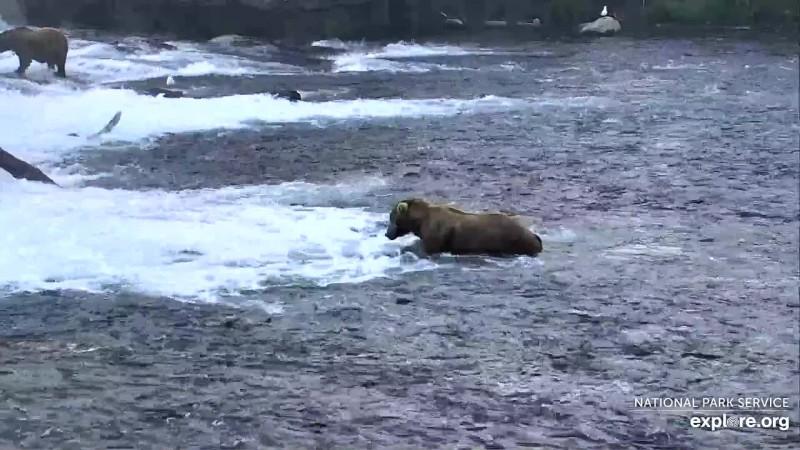 Bears_Otis_RavensClaws_7.16.19_WINNER