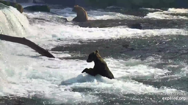 Bears_Subadult_Moon river_WINNER