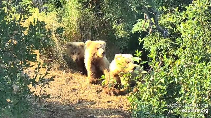 Bears_TinyJulz<><_7.7.19