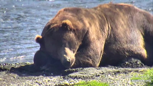 Bearcam Week in Review August 16, 2019