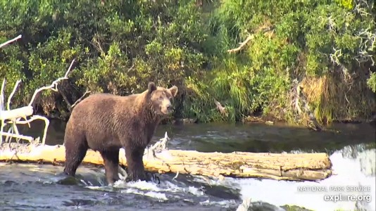 Bearcam Week in Review August 23, 2019