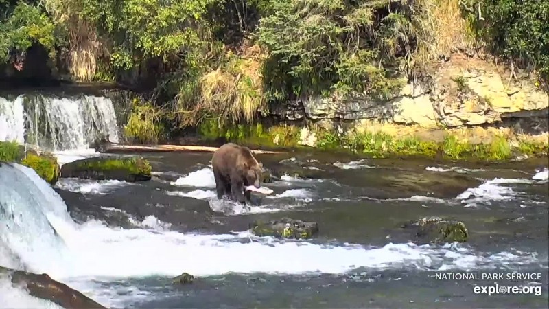 812 catches a nice silver salmon in the far pool Snapshot by GreenRiver