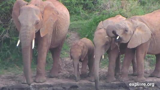 Africa_Elephants_CarlaJ_11.1.18