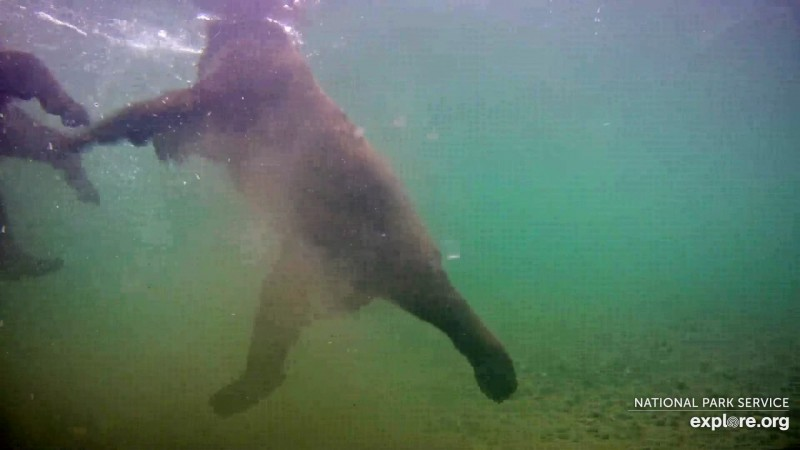 bears playing by the underwater cam Snapshot by Owl_And_Osprey_Lover_CA2017