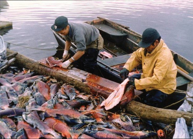 People process redfish at the mouth of the Brooks River in 1960.