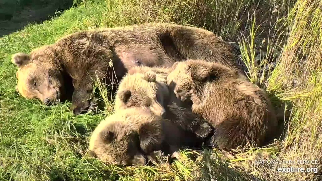 273 and coy napping Snapshot by CamOp Kwaahu