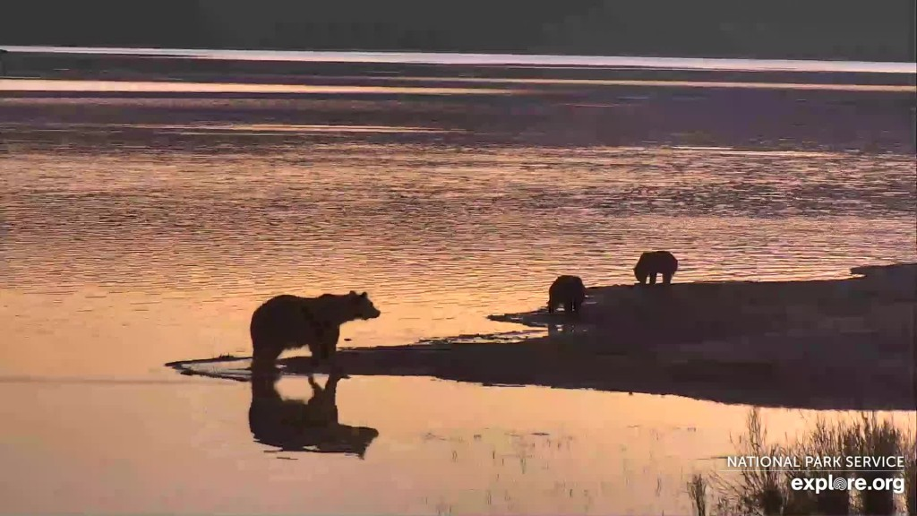 719 and coy at sunrise Snapshot by Jen