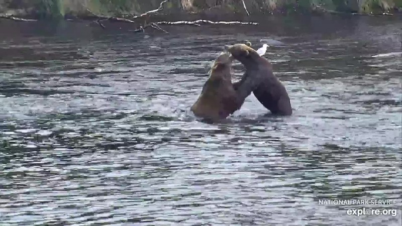812 and 821 play fight Snapshot by Blair-55