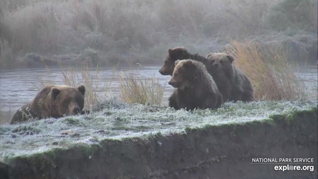 273 and coy on a frosty morning Snapshot by Christy1