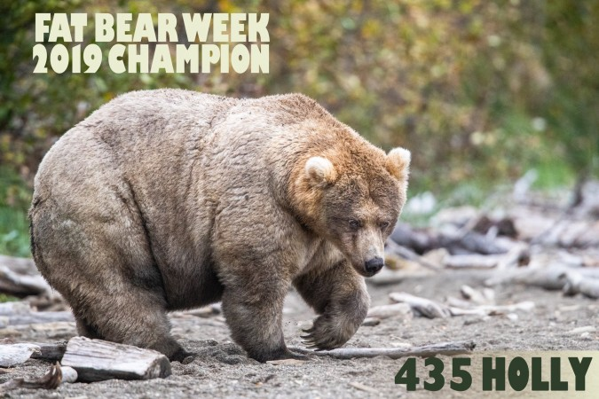 435 Holly Fat Bear Week Champ