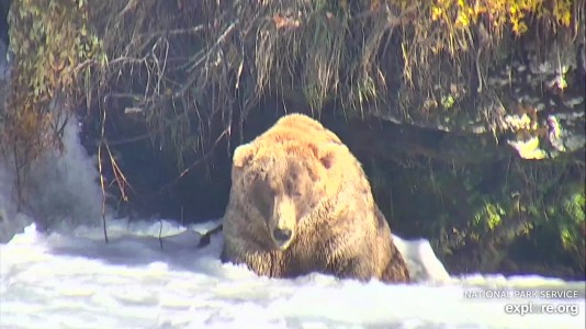 Bearcam Week in Review October 18, 2019