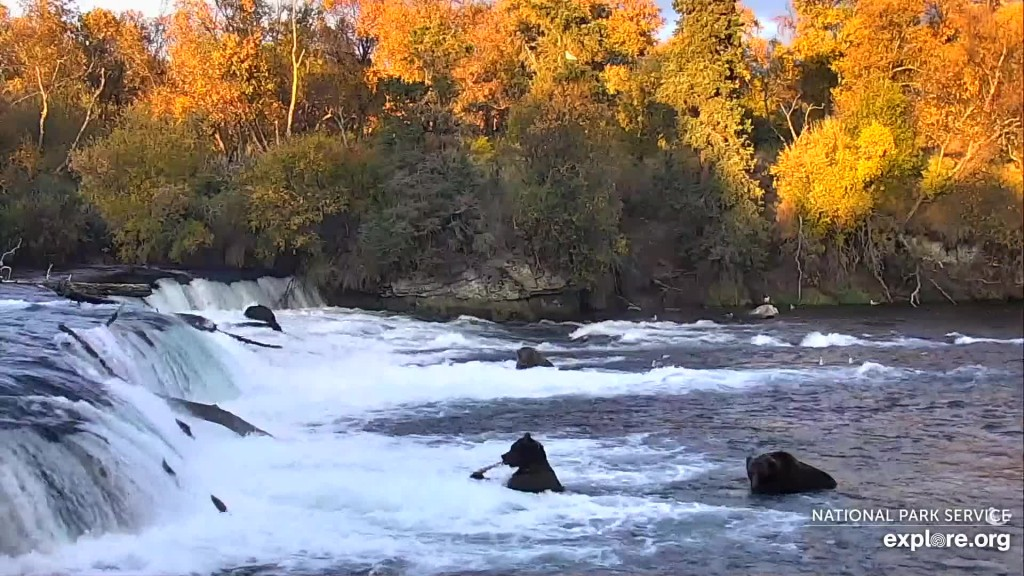 Fall has arrived at Brooks Falls Snapshot by Larinor