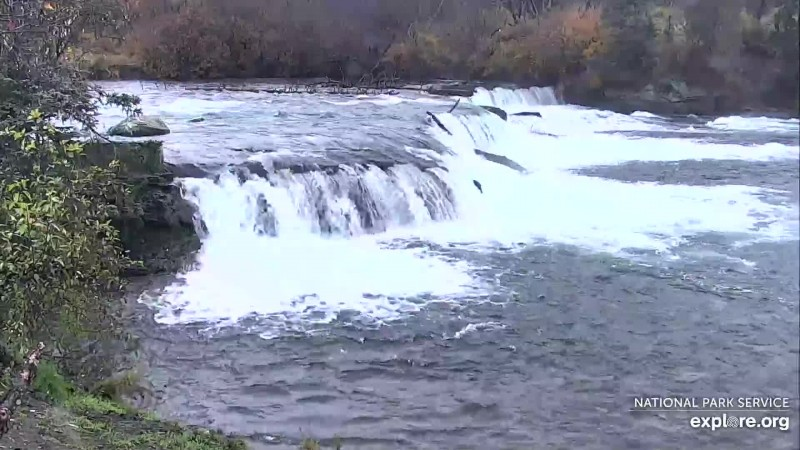 lone salmon jumping an empty falls Snapshot by pkilborn