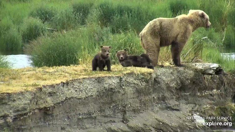 Bears_LR_MomAndCubs_LaurieM_6.30.19