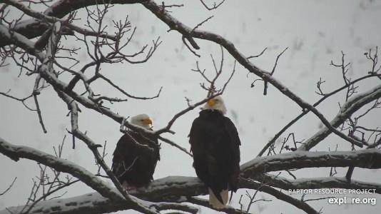Decorah North Eagles